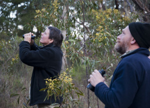 Habitat for Bush Birds - Birdwatching for Beginners