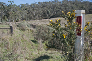 Landcare works on weeds and riparian zones