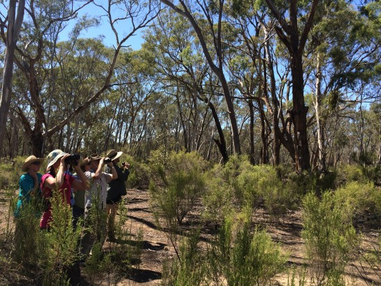 Part of the group scans the bush for woodland birds at the Quince tree site