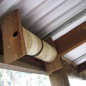 photo of nest for Spotted Pardalote, made by Ric Higgins for Frances