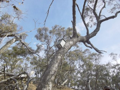 Typical nest box in a tree.