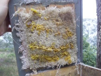 Carpet under the nest box lid was not successful in discouraging bees.